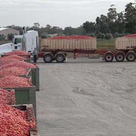 Tomato bins being delivered to factory02